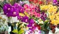 flowers-in-chatuchat-weekend-market