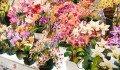 live-flowers-chatuchak-market